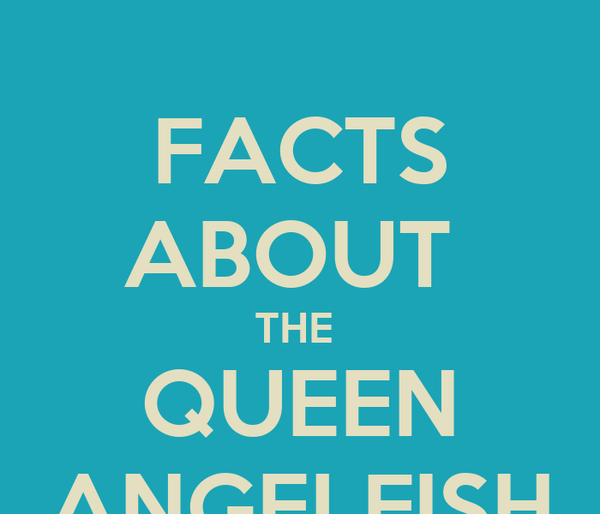 FACTS ABOUT  THE  QUEEN ANGELFISH