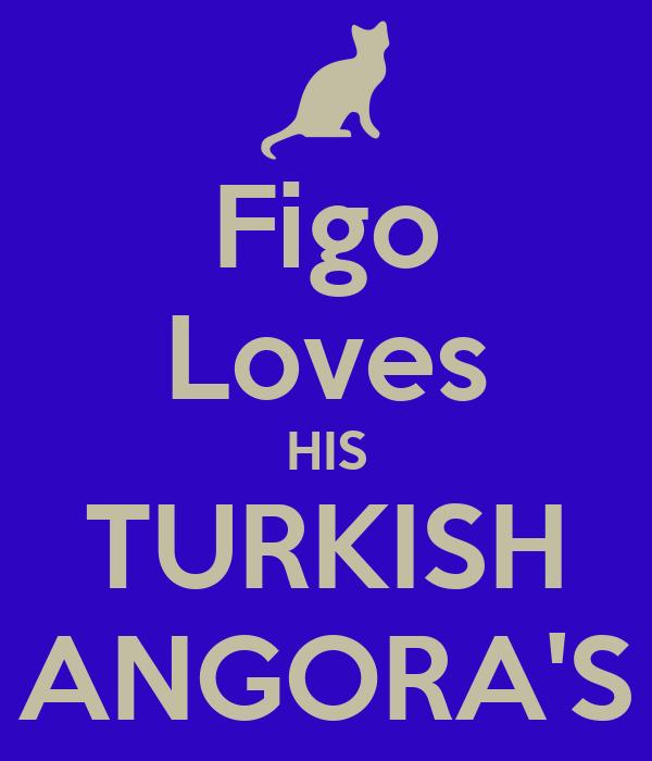 Figo Loves HIS TURKISH ANGORA'S