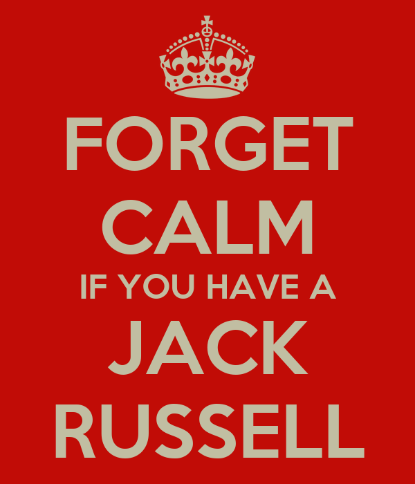 FORGET CALM IF YOU HAVE A JACK RUSSELL