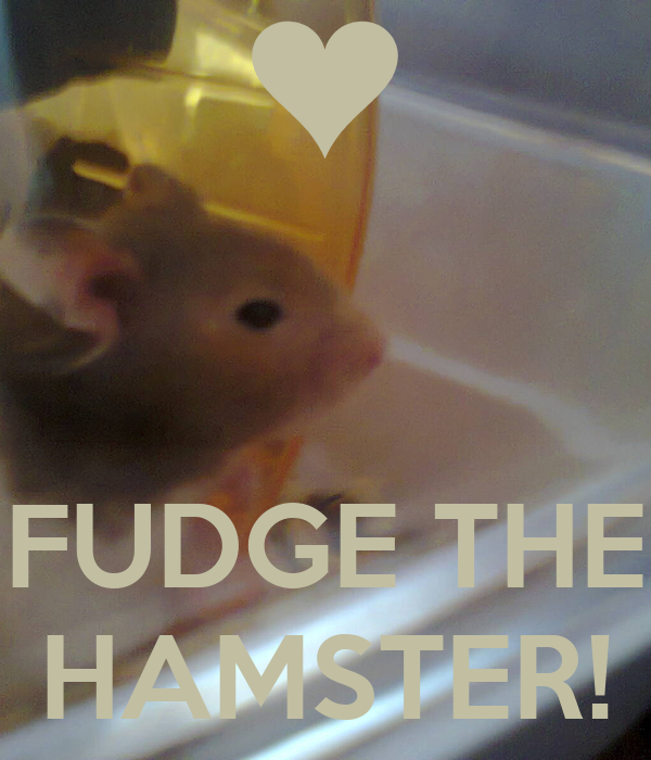 FUDGE THE HAMSTER!