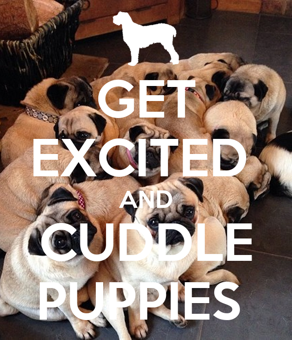 GET EXCITED  AND CUDDLE PUPPIES