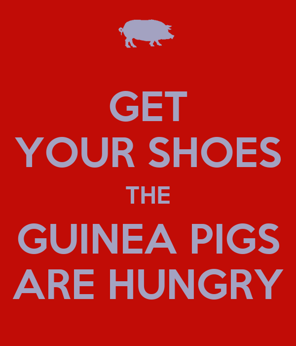 GET YOUR SHOES THE GUINEA PIGS ARE HUNGRY