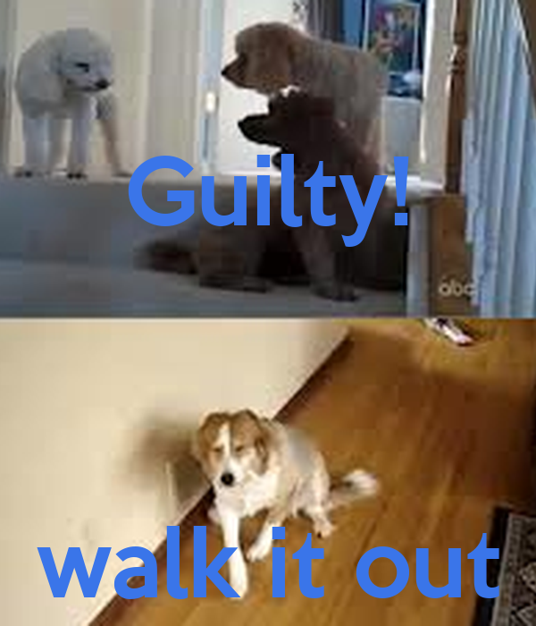 Guilty!    walk it out