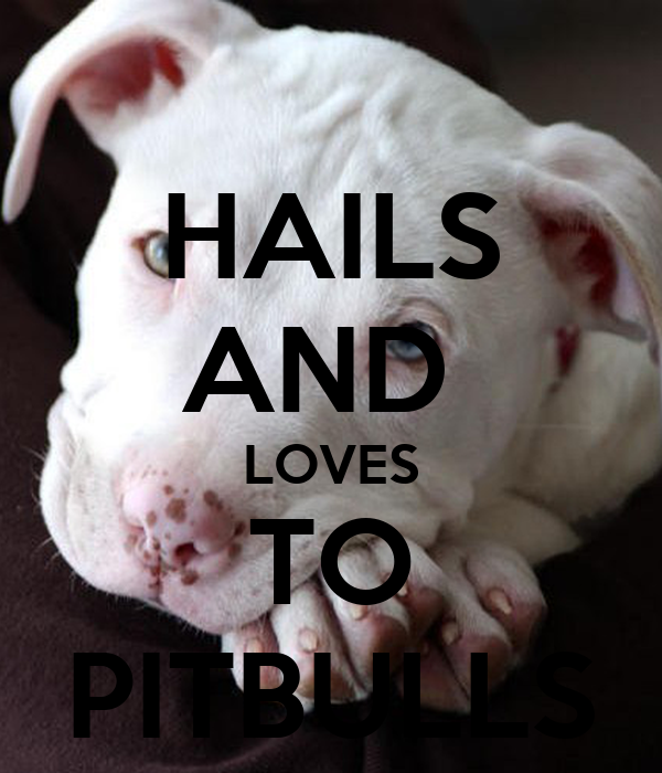 HAILS AND  LOVES TO PITBULLS
