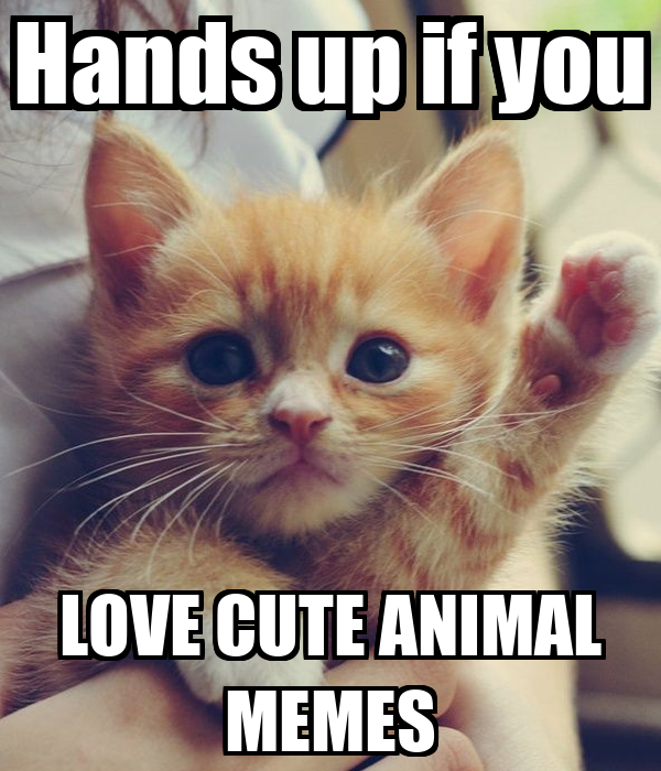 Cute love animal memes