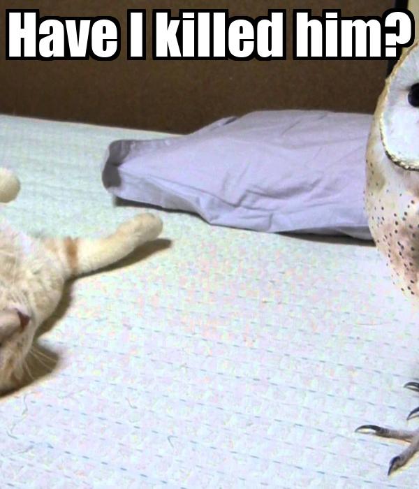 Have I killed him?