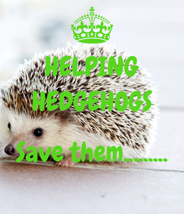 HELPING HEDGEHOGS  Save them.........