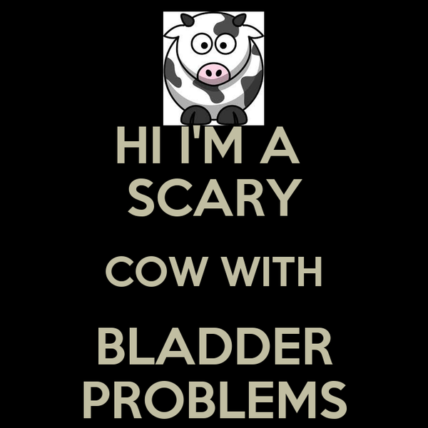 HI I'M A  SCARY COW WITH BLADDER PROBLEMS