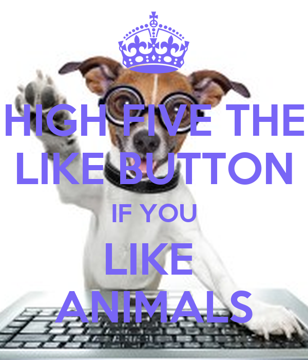 HIGH FIVE THE LIKE BUTTON IF YOU LIKE  ANIMALS