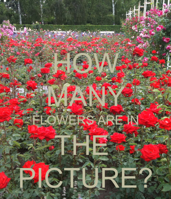 HOW MANY FLOWERS ARE IN THE  PICTURE?
