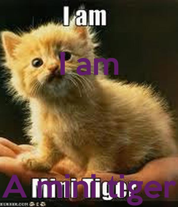 I am    A mini tiger
