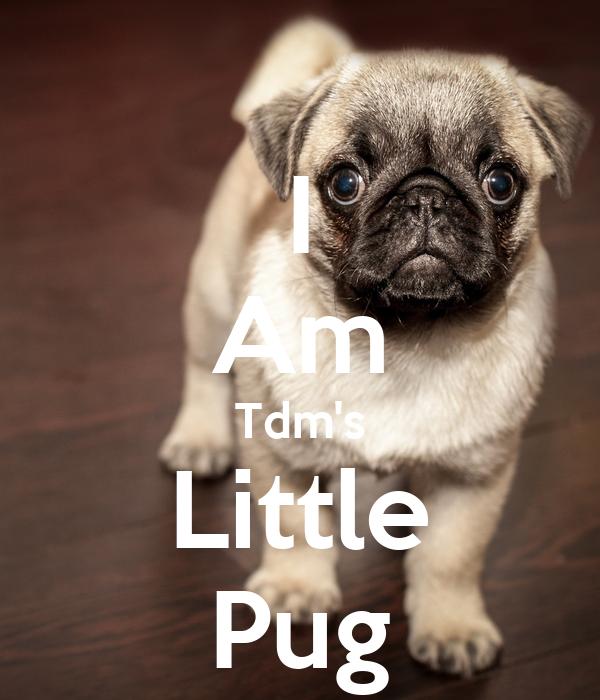 I Am Tdm's Little Pug