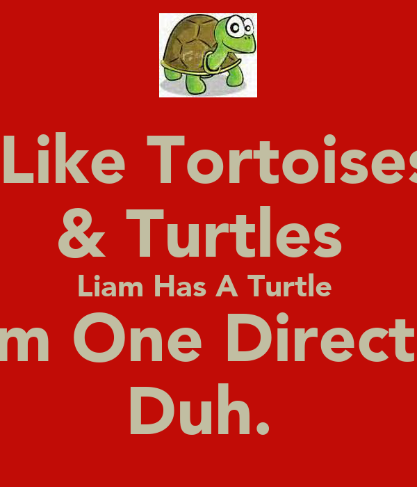 I Like Tortoises  & Turtles  Liam Has A Turtle  From One Direction  Duh.