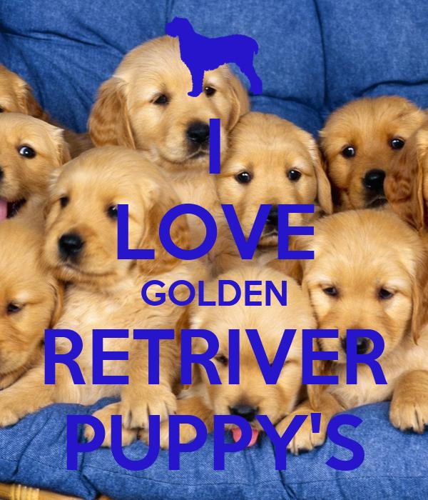 I LOVE GOLDEN RETRIVER PUPPY'S