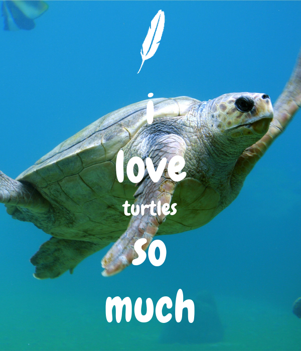 i love turtles so much