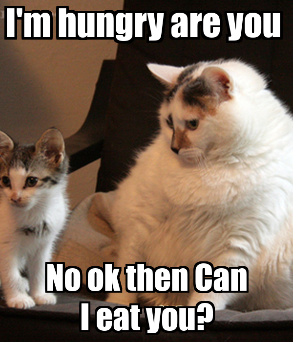I'm hungry are you  No ok then Can I eat you?