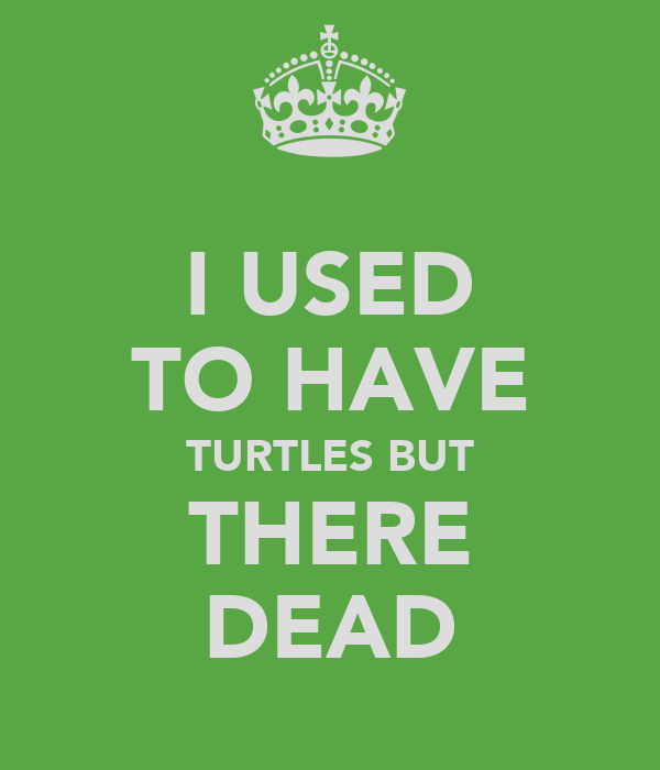 I USED TO HAVE TURTLES BUT THERE DEAD