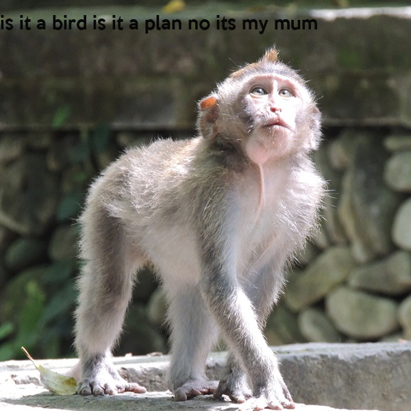 is it a bird is it a plan no its my mum