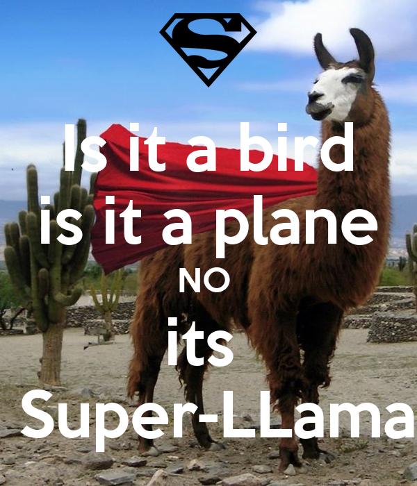 Is it a bird  is it a plane  NO  its   Super-LLama