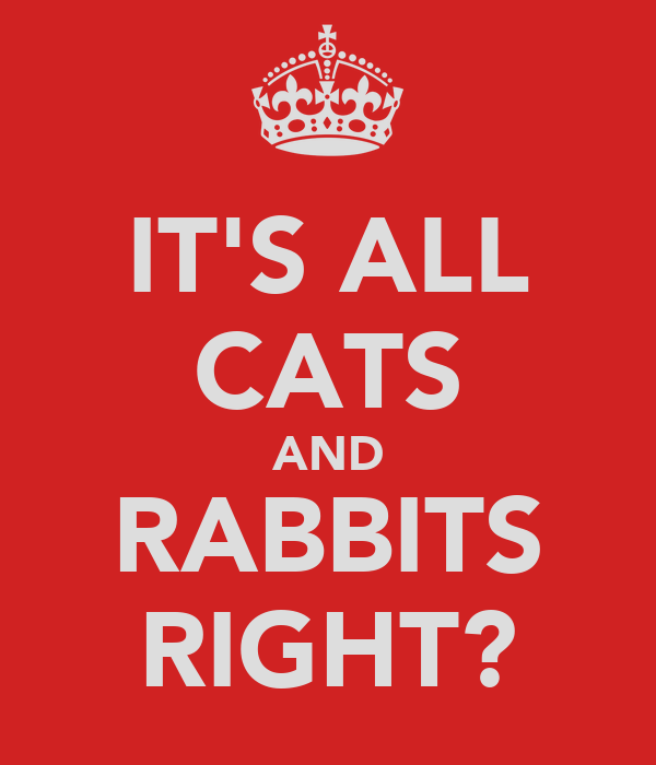 IT'S ALL CATS AND RABBITS RIGHT?
