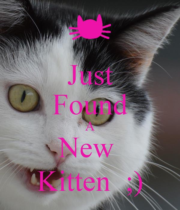 Just Found A New  Kitten  ;)