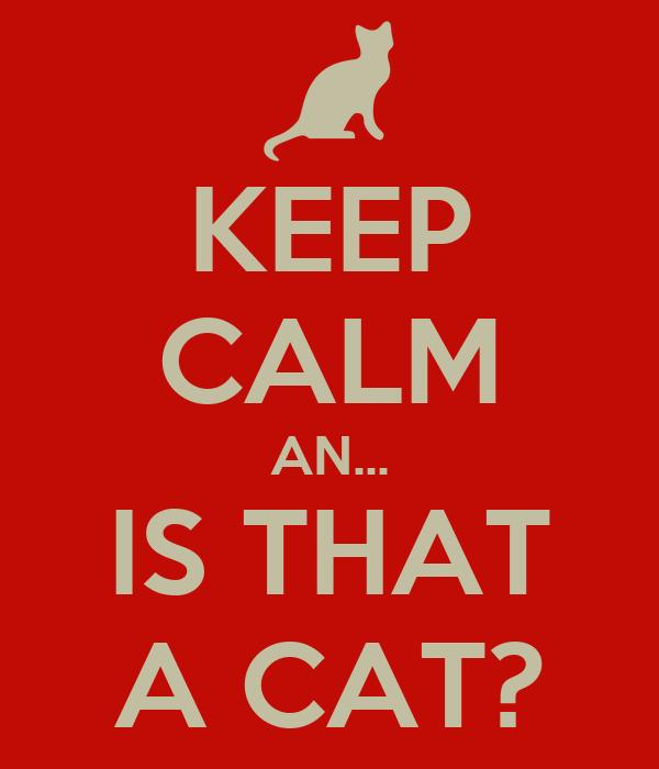 KEEP CALM AN... IS THAT A CAT?