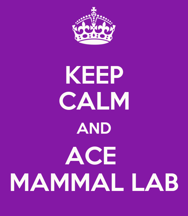 KEEP CALM AND ACE  MAMMAL LAB