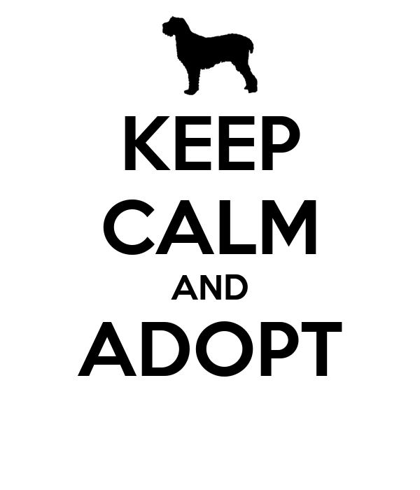 KEEP CALM AND ADOPT
