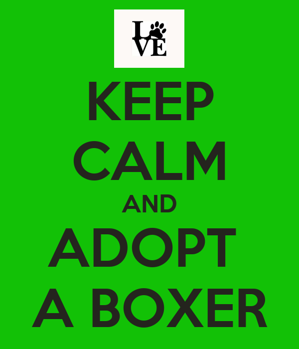 KEEP CALM AND ADOPT  A BOXER