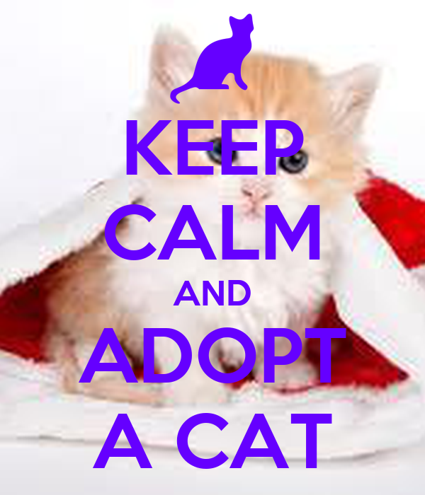 KEEP CALM AND ADOPT A CAT