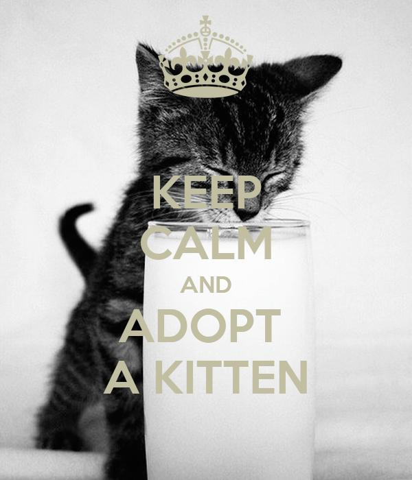 KEEP CALM AND ADOPT  A KITTEN