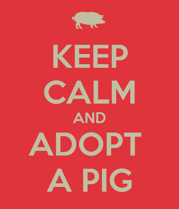 KEEP CALM AND ADOPT  A PIG