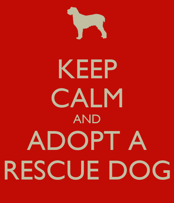 KEEP CALM AND ADOPT A  RESCUE DOG