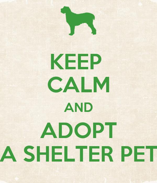 KEEP  CALM AND ADOPT A SHELTER PET