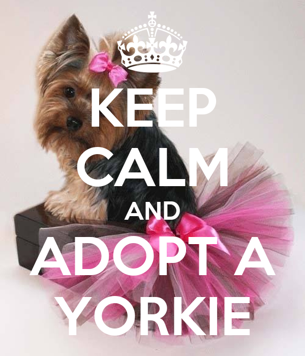 KEEP CALM AND ADOPT A YORKIE