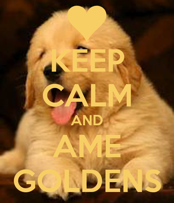 KEEP CALM AND AME GOLDENS