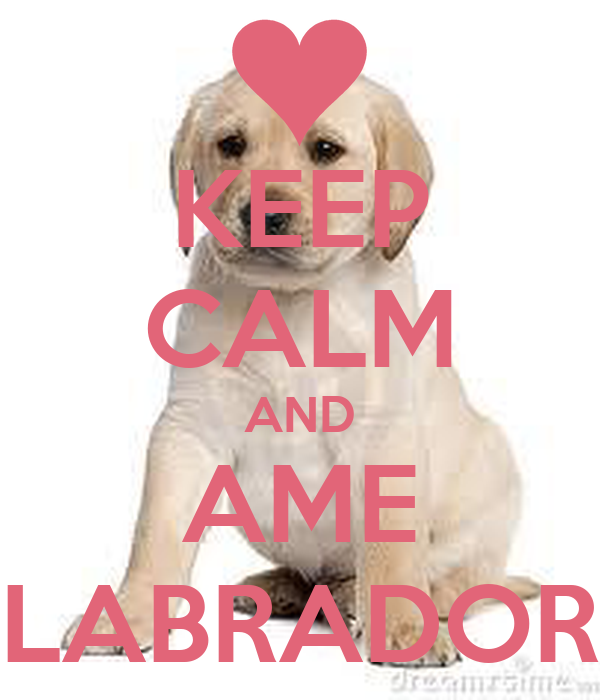 KEEP CALM AND AME LABRADOR