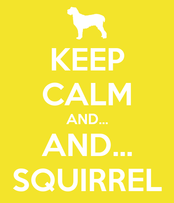 KEEP CALM AND... AND... SQUIRREL