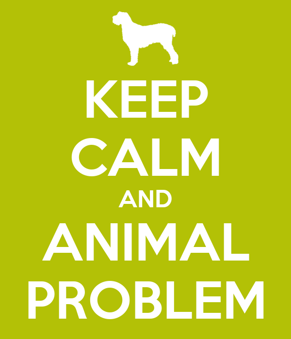 KEEP CALM AND ANIMAL PROBLEM