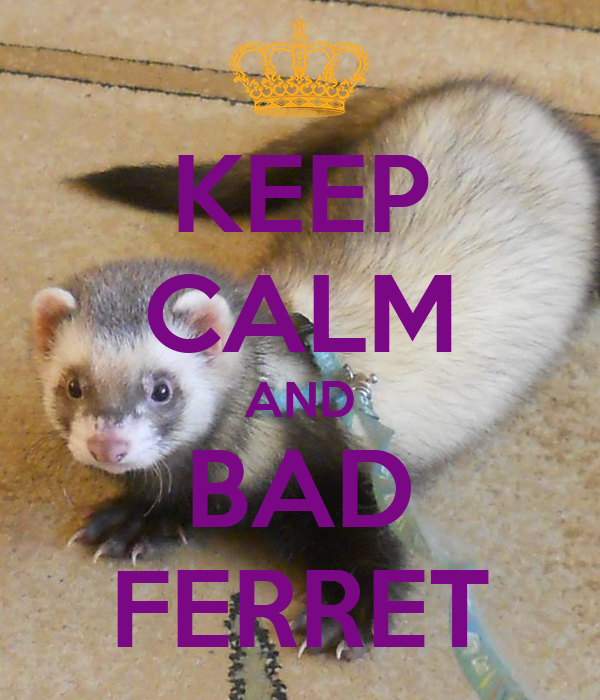KEEP CALM AND BAD FERRET