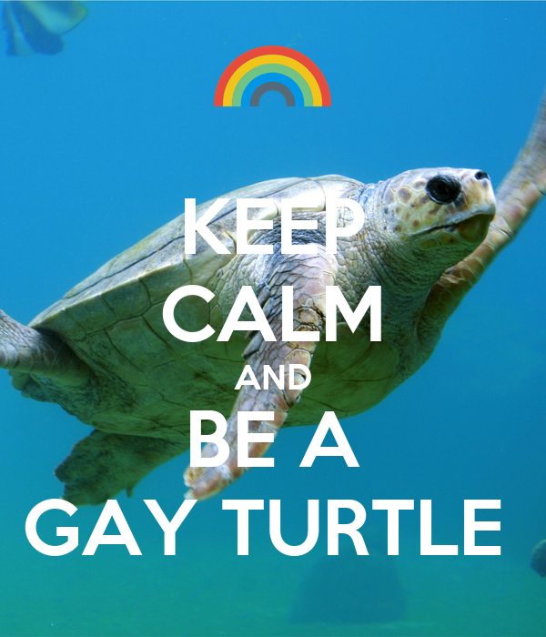 KEEP CALM AND BE A GAY TURTLE