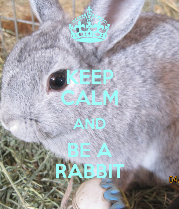 KEEP CALM AND BE A RABBIT