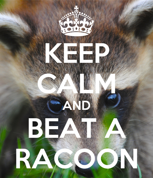 KEEP CALM AND BEAT A RACOON