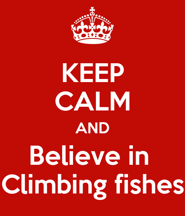 KEEP CALM AND Believe in  Climbing fishes