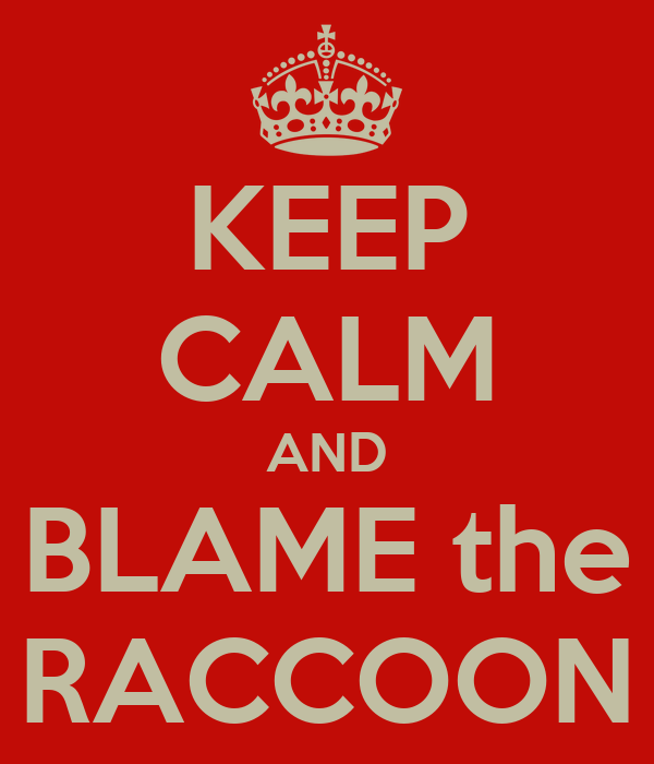 KEEP CALM AND BLAME the RACCOON