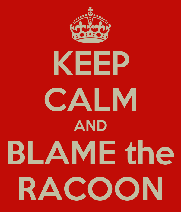 KEEP CALM AND BLAME the RACOON
