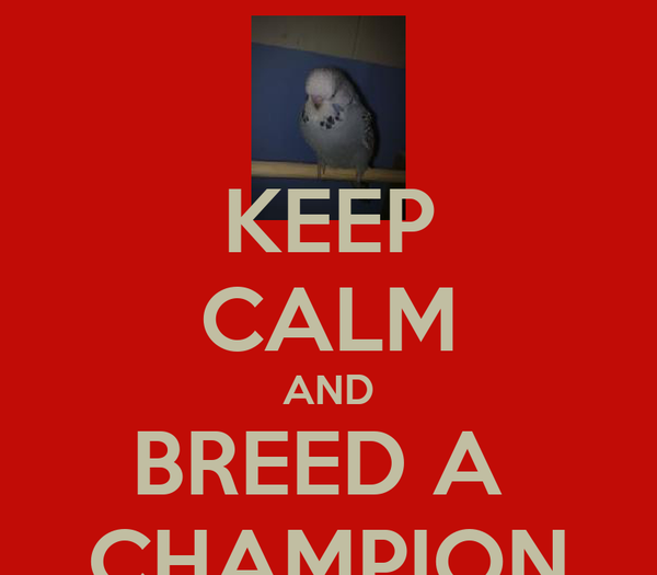 KEEP CALM AND BREED A  CHAMPION