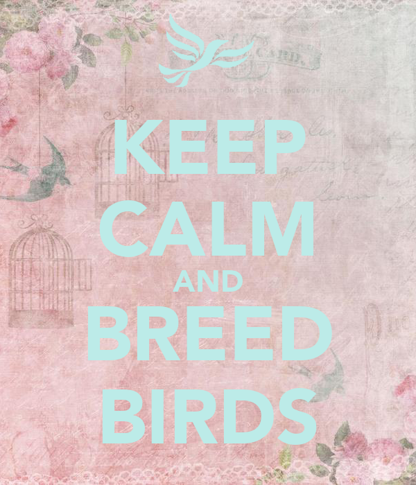 KEEP CALM AND BREED BIRDS