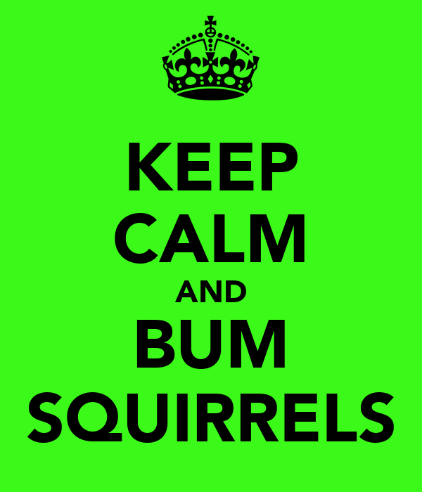 KEEP CALM AND BUM SQUIRRELS