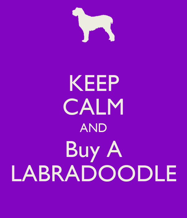 KEEP CALM AND Buy A LABRADOODLE